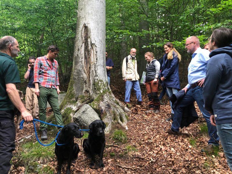 Gruppe besichtigt den Wald